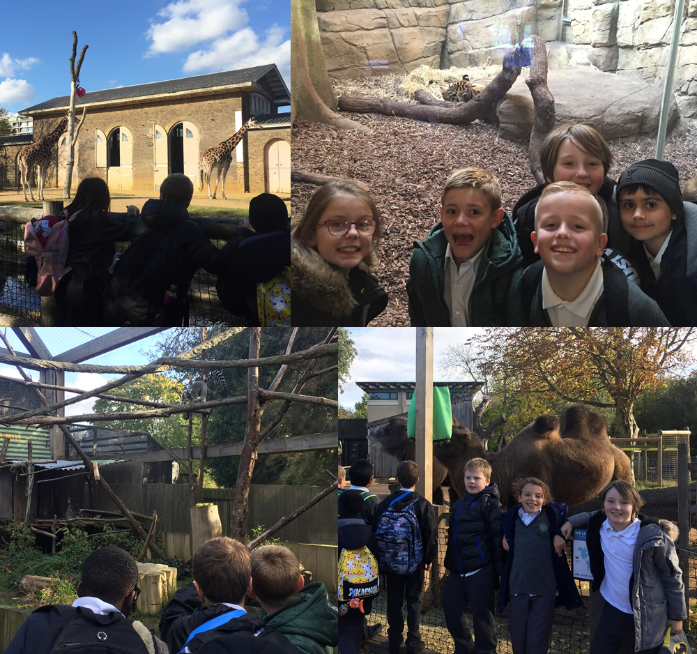 A great day learning about animals at London Zoo.