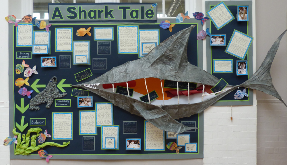 Our Year 4 Blue Planet display with our huge shark is finished!