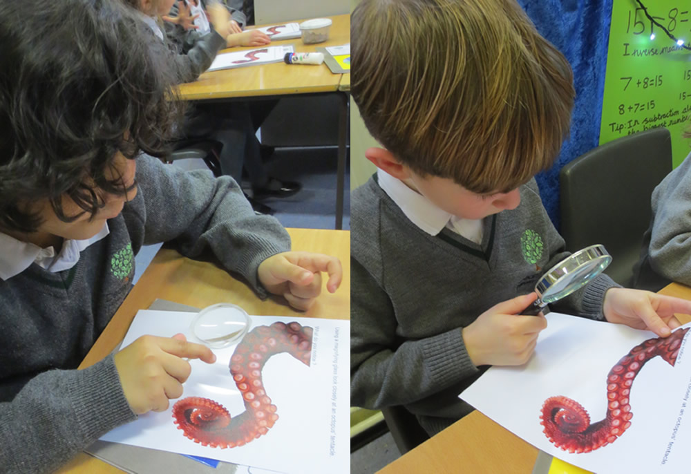 Looking closely at octopus tentacles.