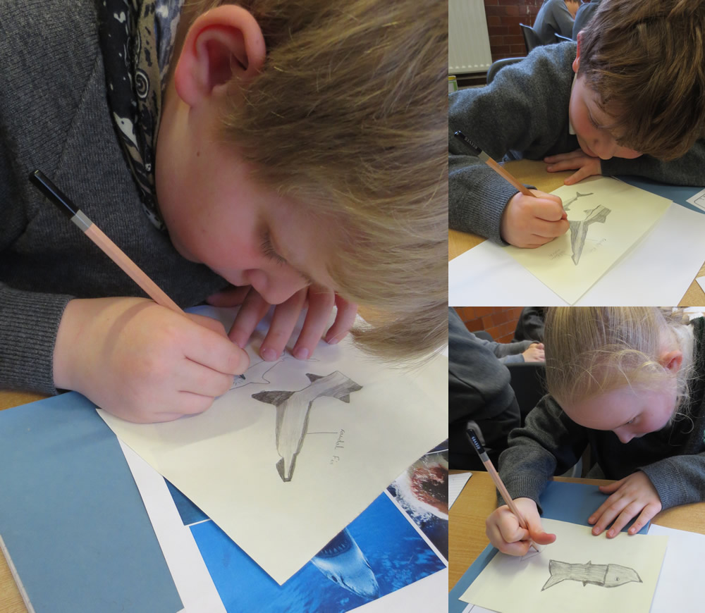 Sketching sharks for the Year 4 Blue Planet display.