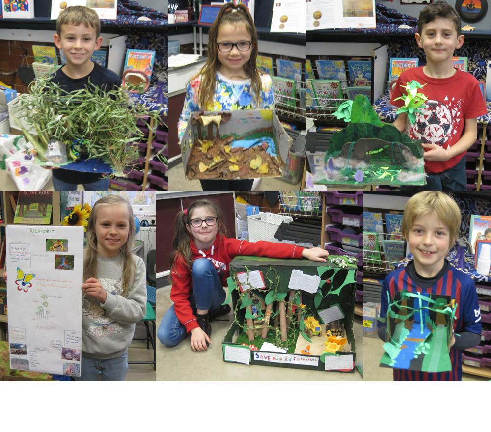 We worked on our rainforest projects at home.