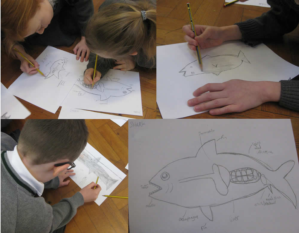 We've been drawing fish inside and out ...