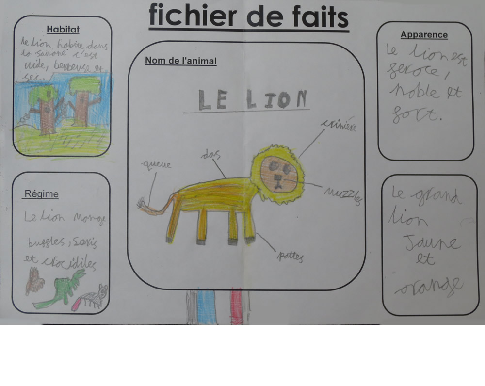 In French, we wrote lion factfiles.