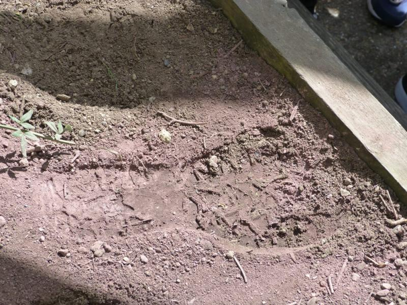 Who left this footprint in the garden?